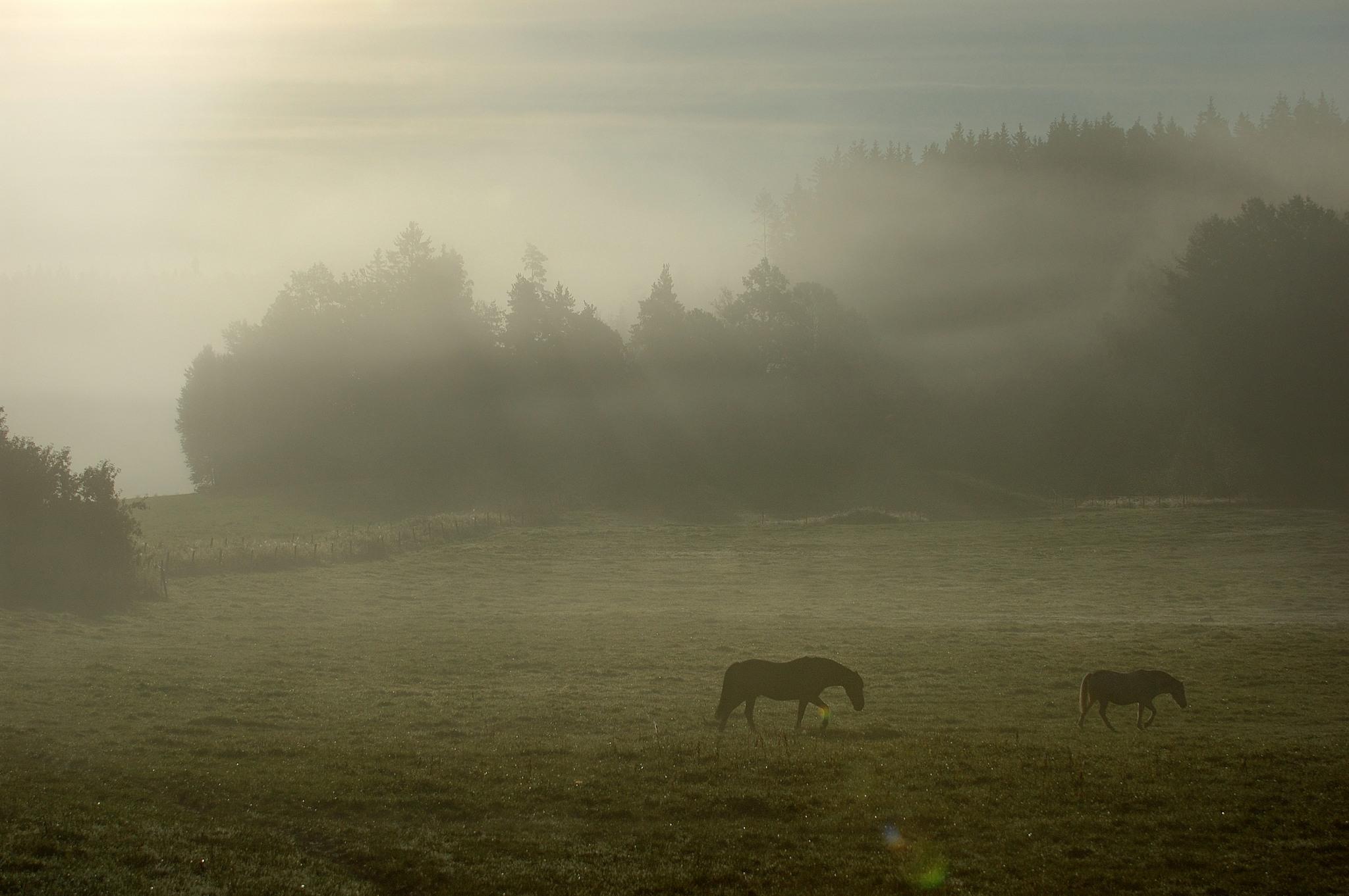 En häst som går på en äng i dimma.