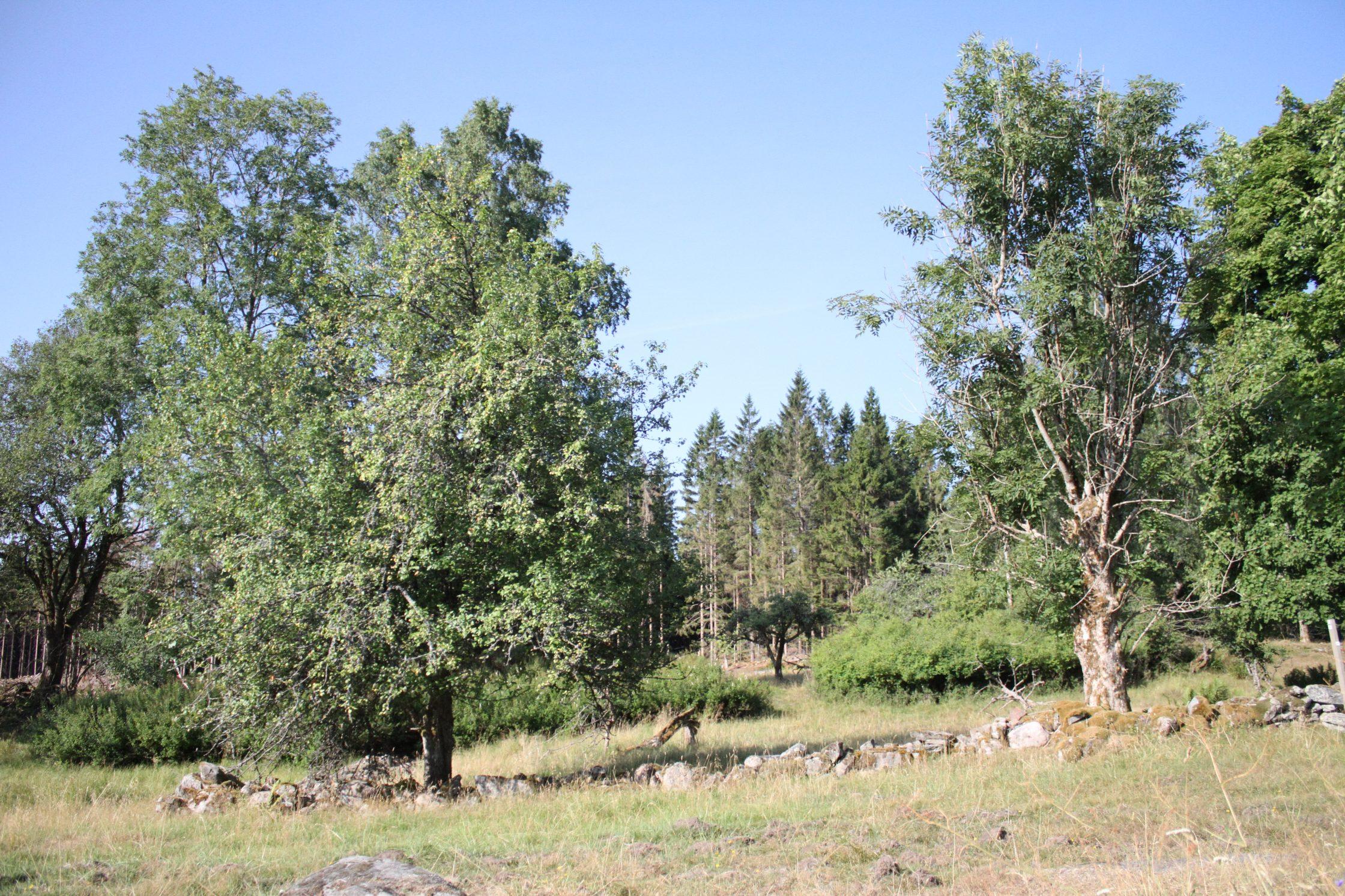 Naturvårdsområdet Idåsen