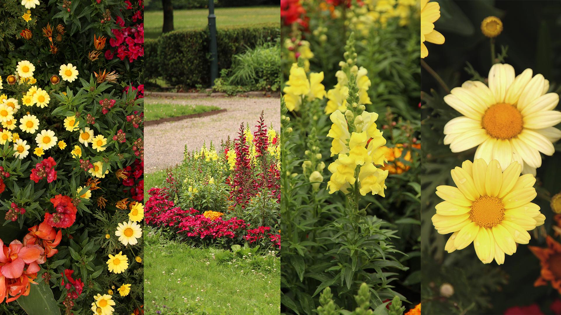 Ett kollage med blomsterplanteringar runt om i Alingsås kommun.